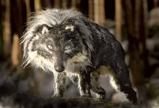 pierre-loup